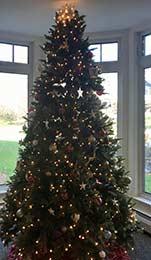 Christmas Tree at Bartlett Woods
